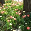 2018/3月 『Garden Necklace』日本大通り〜♪