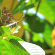 白山の奥 蛇谷で見た蝶や蛾