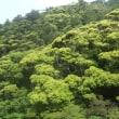 大国林道  新緑はバッチリ