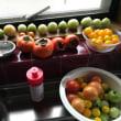 「青いトマト」