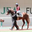 カエラチャンの弟(美しい馬だった!)