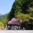 麓は春、山頂は春の兆しが・・・・    綿 向 山 (1,110m)