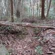 枯れ木にクソナバが‼
