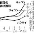 今日以降使えるダジャレ『2044』【経済】■キャベツ3・1倍、レタス3・5倍…高値続く