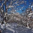 12月の函館山