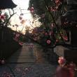 阿智神社、春の夕暮れ