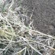 材料の切り出しと、足跡採取のやり直し