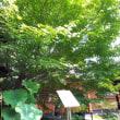 京都吉祥紅葉