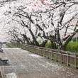 春の風景①