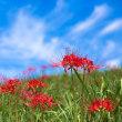 上淀廃寺跡の青空に映える彼岸花