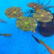 池袋サンシャイン水族館   ~aquarium~ ❶