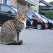 「興味津々!」 いわき 北白土にて撮影! ネコちゃんの散歩