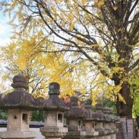 上野公園の銀杏