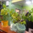 植物による国際交流