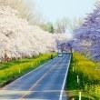 春も真っ盛り