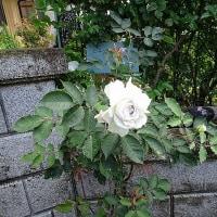 オープンガーデン熊野②
