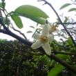 5月19日の花