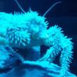 深海の神秘「シーラカンス・ミュージアム」