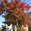 小型犬の撮影小物