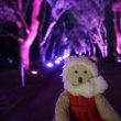 25日まで。「京都府立植物園」のイルミネーションとちょっとドキドキの夜間温室見学