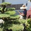 我が家の庭師さん