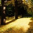 立川・昭和記念公園の秋色