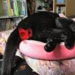 黒猫ジジィは夏休み中