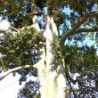 向井三社神社を訪ねる(香川の神社116)