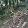 ゆずの木倒された