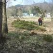 2018.4.2 屋敷内の木を伐採。