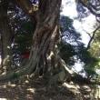 一本杉公園に寄り道散歩