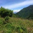 栗の木の草刈り