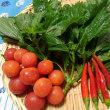 無農薬の朝採り野菜をいただきました