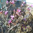 春の香りが鼻につ~んときます!