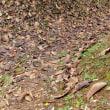 落ち葉の山