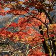 標示見落とし、晩秋の武甲山と子持山へ
