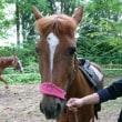 お馬に会いにきてください☆