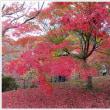 京都紅葉旅―LAST