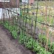 農作業と家庭菜園