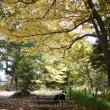 丘公園の紅葉の中で。