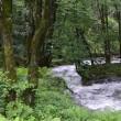 「蓼科のグランドキャニオン」と言われました、午後の森渓谷。