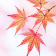 秋色ものがたり(Ⅳ)