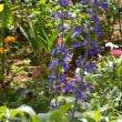 季節を感じさせる花々が咲き出して元気をプレゼント。リハビリでまだ出来ていないうつ伏せ、なんでもないことなのに。