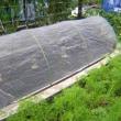 そら豆栽培、種まき、発芽、畝作り、植付、防虫ネット張り迄済ませた