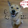 2018 12/11★今日はたろう君とあずきちゃんです★
