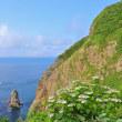 初夏の絵鞆半島を西~東へ行く