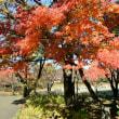 足立区 都市農業公園の紅葉・・2