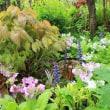庭にいい雨