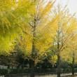 11月8日(木)の聖言