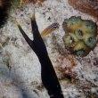 超べたナギの水納島・・・透明度は40m